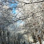 Lower Merions Racial Snowstorm